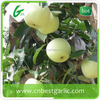 Fresh golden delicious apple fruit specification