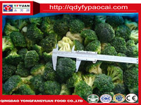 frozen IQF broccoli best selling vegetables and fruits