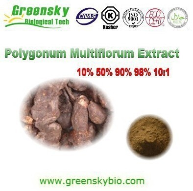 Top Quality Polygonum Multiflorum Extract,Polygonum Multiflorum Extract Powder