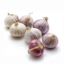 Fresh natural white /purple single clove garlic price 2018 garlic in usa
