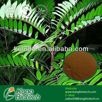 Sex Herbal Extract From Tongkat Ali Powder