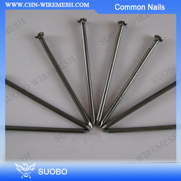 roofing Common Nails for ceiling Factory