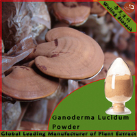 High quality mushroom Ling zhi powder