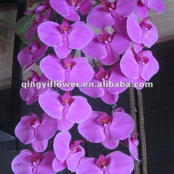 wholesale export tailand fresh cut orchid plants