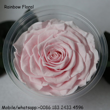 A grade qualtiy preserved rose head cheap wholesale light pink color dried rose flower