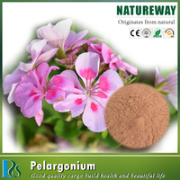 Top quality Free Sample Pelargonium hortorum extract Dmaa powder