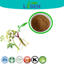 100% Natural herb extract angelica sinensis extract