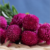 4074 Qianrihong Top Grade Herbal Tea Globe amaranth Flower