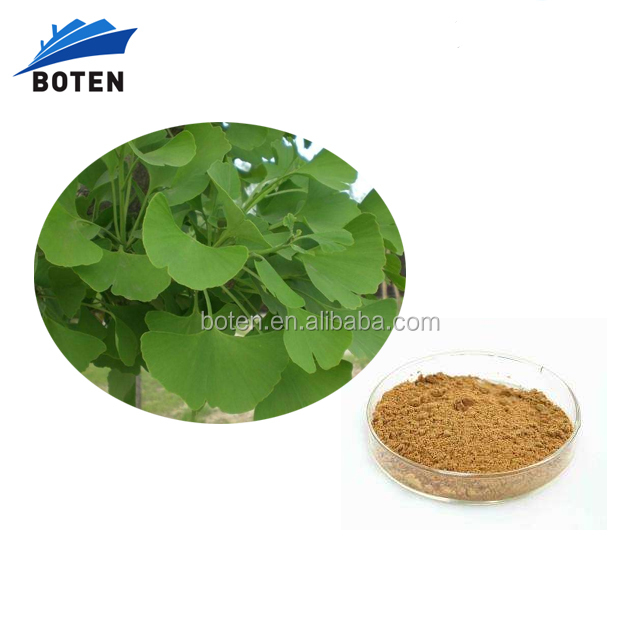 Boten Supplier of natural Ginkgo Biloba leaf extract
