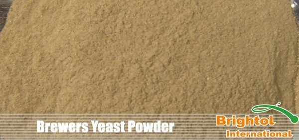 Best price Brewers Yeast