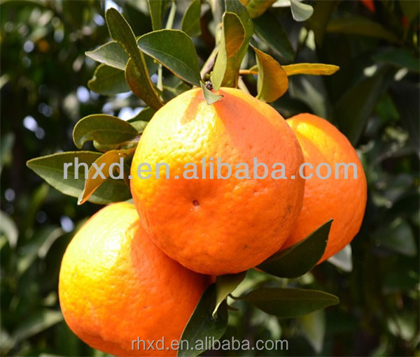 China 2016 fresh mandarin orange citrus fruit with best price