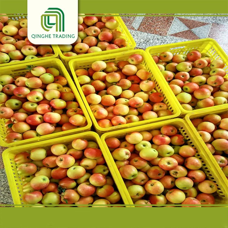 competitive price of 150-198# red royal gala apple for Bangladesh market