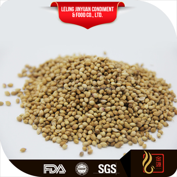 Chinese spice coriander Seeds