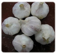 Fresh Natural Organic Vegetable Garlic