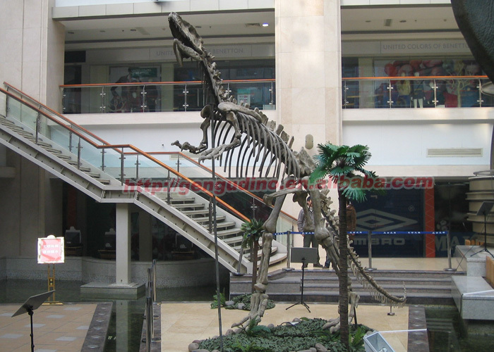 Dinosaur skeleton replicas