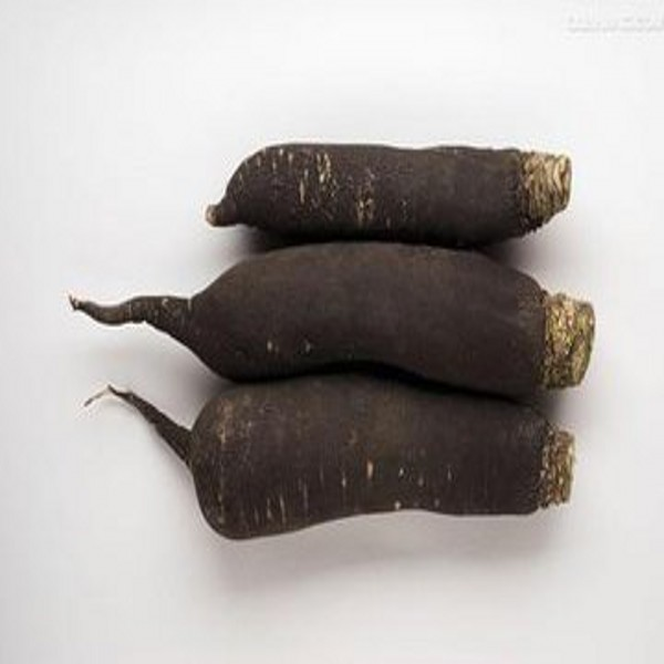 Black Radish Powder extract with best qaunlity