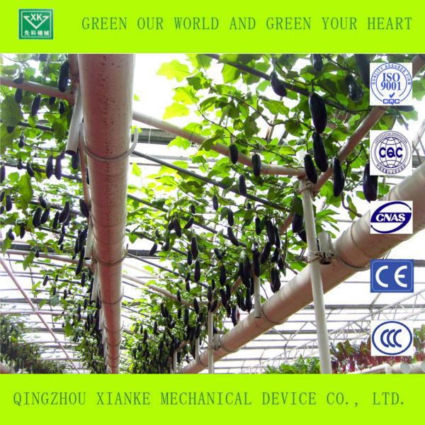 High-tech Greenhouses and Hydroponic Systems for vegetable growing