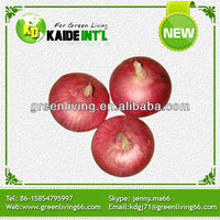 Cheap Price Wholesale Indian Fresh Onion