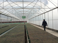 By Pvc Or Plastic Sheeting Covered Back Yard Tunnel Greenhouse