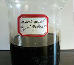 Seaweed Liquid Extract