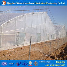 Industrial multi span polytunnel plastic polycarbonate glass greenhouse
