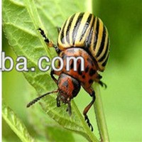 Professional supplier Insecticide Methomyl/ Thiodicarb/ Lannate 90%SP