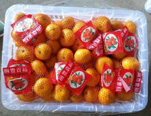mandarin <strong>oranges</strong> from Chinese nanfeng