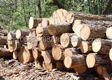 Bubinga Wood Logs and Lumber