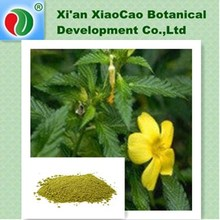 Chinese Herbal Sex Medicine !Damiana Leaf Extract Powder,Damiana P.E,Damiana Leaf P.E