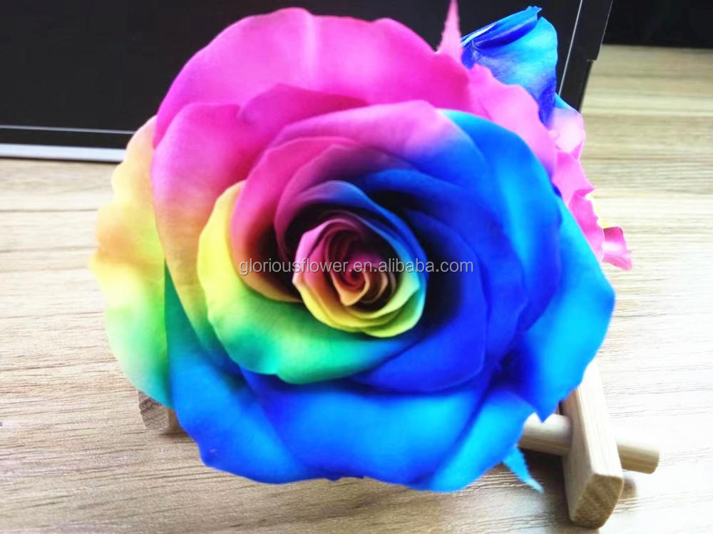 Rainbow rose color preserved rose with wholesale price from China