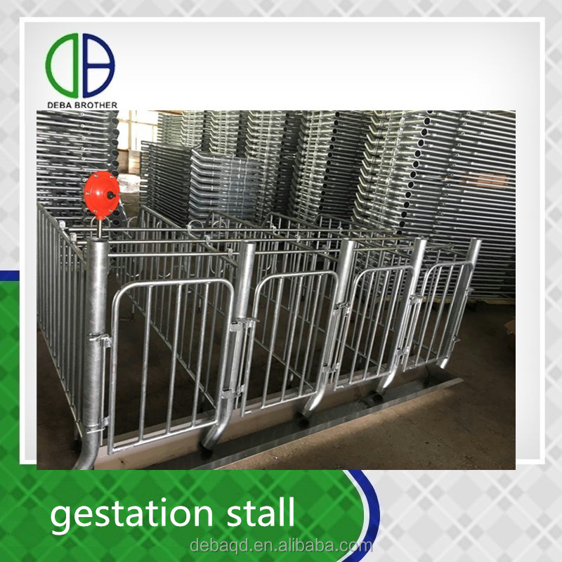 Pig Farm use custom design equipment sow pens Galvanized Pig Gestation Stall for sows