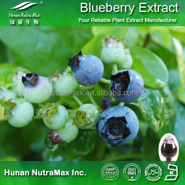 Blueberry Extract Powder Health Benefits for eyes, Blueberry Extract Anthocyanosides