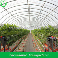 Agricultural Tunnel Greenhouses For Tomato