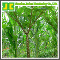 High quality Amorphophallus Konjac P.E