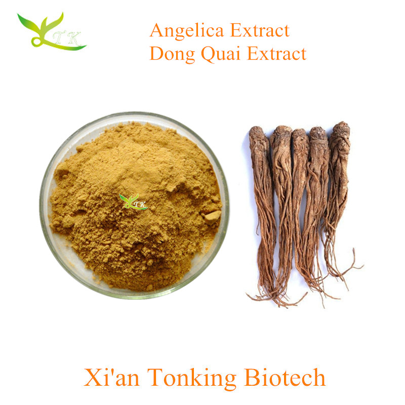 High Quality Traditional Chinese Medicine angelica