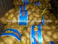 high quality best price potato from china
