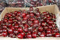 Fresh Cherries from Argentina