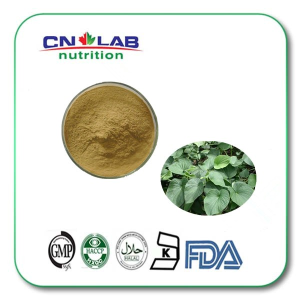 Free sample kava extract powder, kava lactones