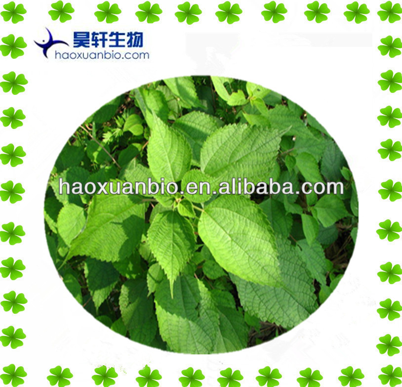 100% Natual Nettle Extract Silica 1.0% Beta-Sitosterols 1.0%
