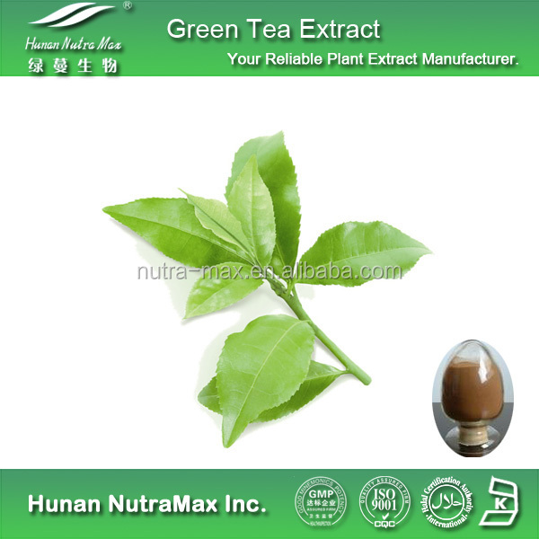 Factory Supply 100 Mesh Slim Green Tea Extract 50% Polyphenol