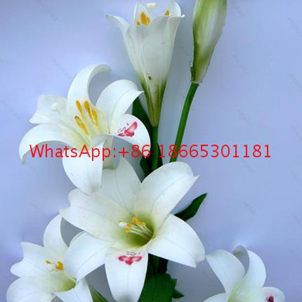 Factory supply multifunction flower printer