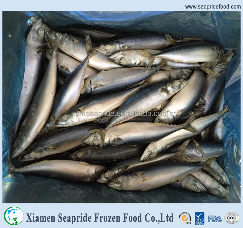 wholesale products pacific mackerel for dried mackerel fish