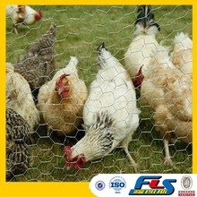 Anping Hot Sale Lowest Price Chicken Wire Mesh