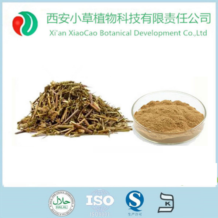 Nepeta Extract/Cat Nut Extract