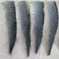 fish meat(mackerel fillets)