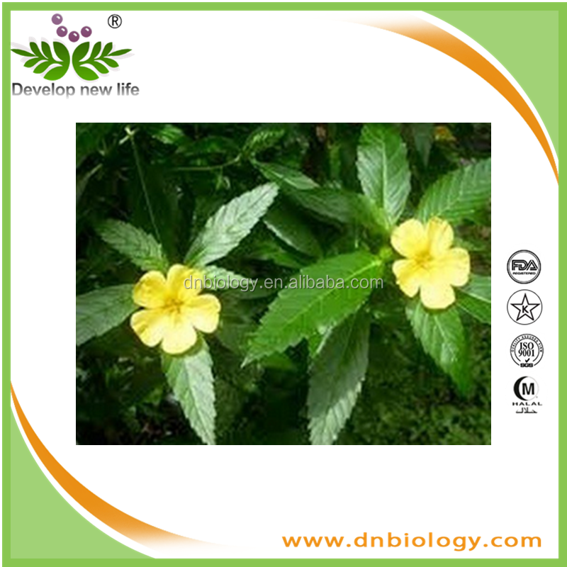 high quality natural damiana leaf extract with ratio extract 10:1 20:1