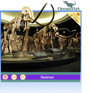 Museum Standard Animated Life Size Mammoths Skeleton