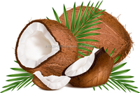 Organic Virgin Coconut Oil Best Quality