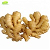 /product-detail/specification-fresh-ginger-819283026.html