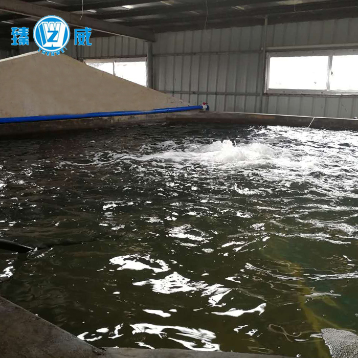 Small scale recirculating aquaculture <strong>system</strong> for cage fish farming